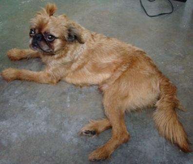 O cão Bóris: das ruas para a revista